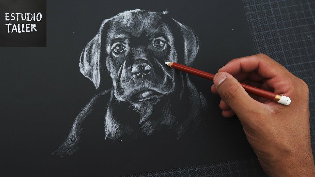 Como Dibujar Un Perro Blanco Sobre Negro Time Lapse Estudio Taller