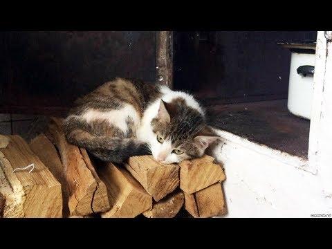 село Вилы Полтавская область - YouTube