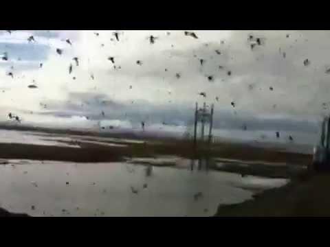 Crazy Unbelievable Amount Of Alaska Mosquitoes Youtube