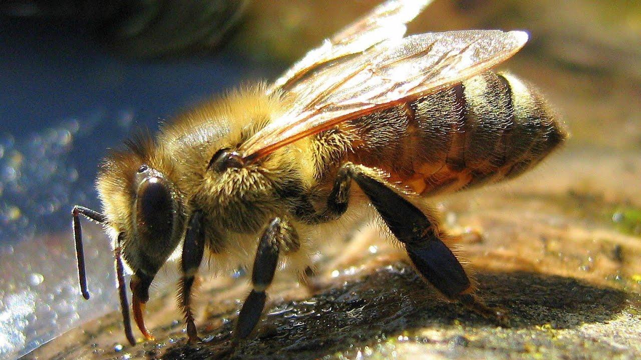 Vedere oameni albini. Video Trăiesc cu frica albinelor   british-pub.ro - Site-ul de stiri al TVR