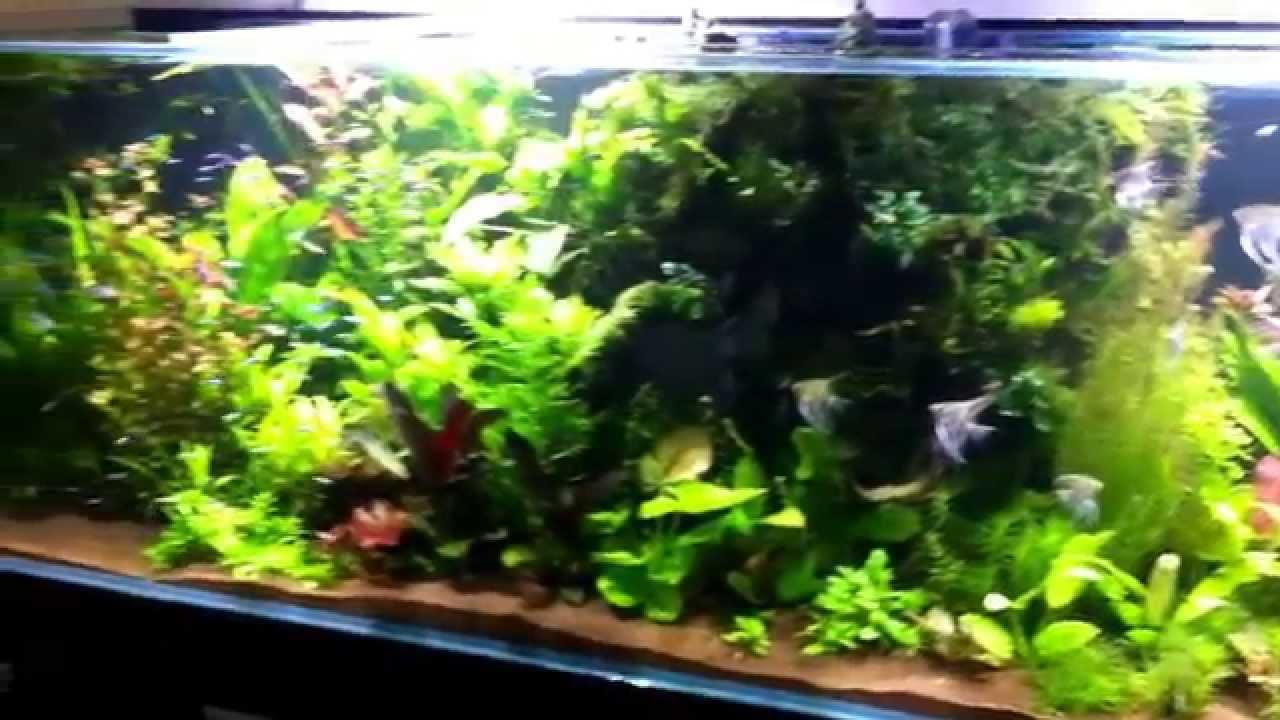 Akwarium Roślinne 1323 Litry Oświetlenie Led Razor 2x160 Wat Argus Aquarium Designgarden
