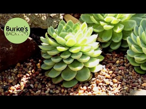 Burke's Backyard, Cactus and Aloe