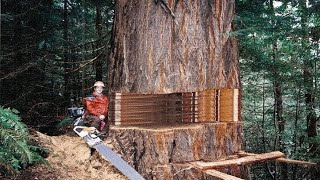 Fastest Big Chainsaw Cutting Tree Machines Skills, Incredible Homemade Wood Cutting Machines