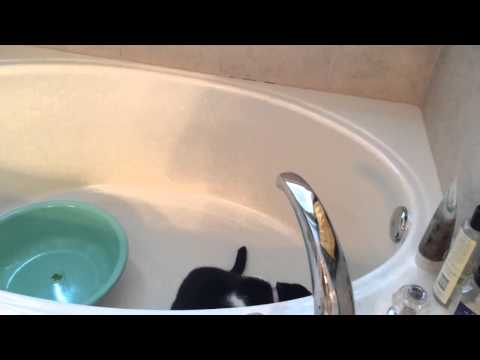 Water-loving cat attempts to turn on faucet