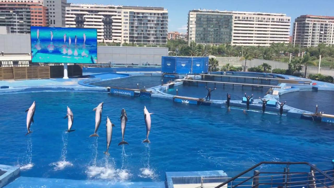 Espect culo de delfines oceanogr fic valencia youtube for Oceanografic valencia
