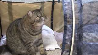 CFA Cat show 2014 Anaheim, California - IdeateTV