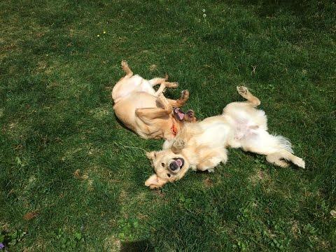 Aggressive Dog Training Savannah Ga