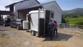 Arrrivée des deux chevaux pur race espagnol : sortie du van