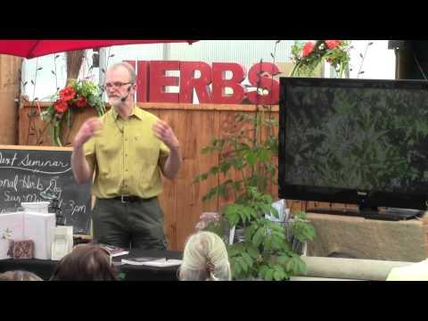 Growing Elderberry for Food & Meds