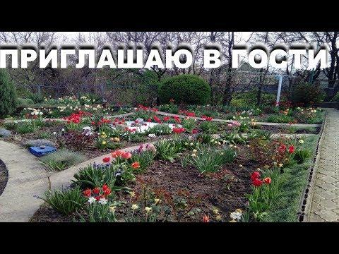 Вопрос: Как заставить себя посадить цветы?