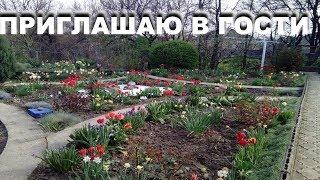 видео Как сделать цветник из многолетников непрерывного цветения?