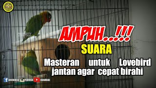 Download lagu #istanakicau #lovebird                         Ampuh..!!!masteran agar  lovebird jantan cepat birahi