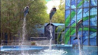 Ocean Discovery (Beluga & Dolphin Show) at SeaWorld San Antonio (8/26/18)
