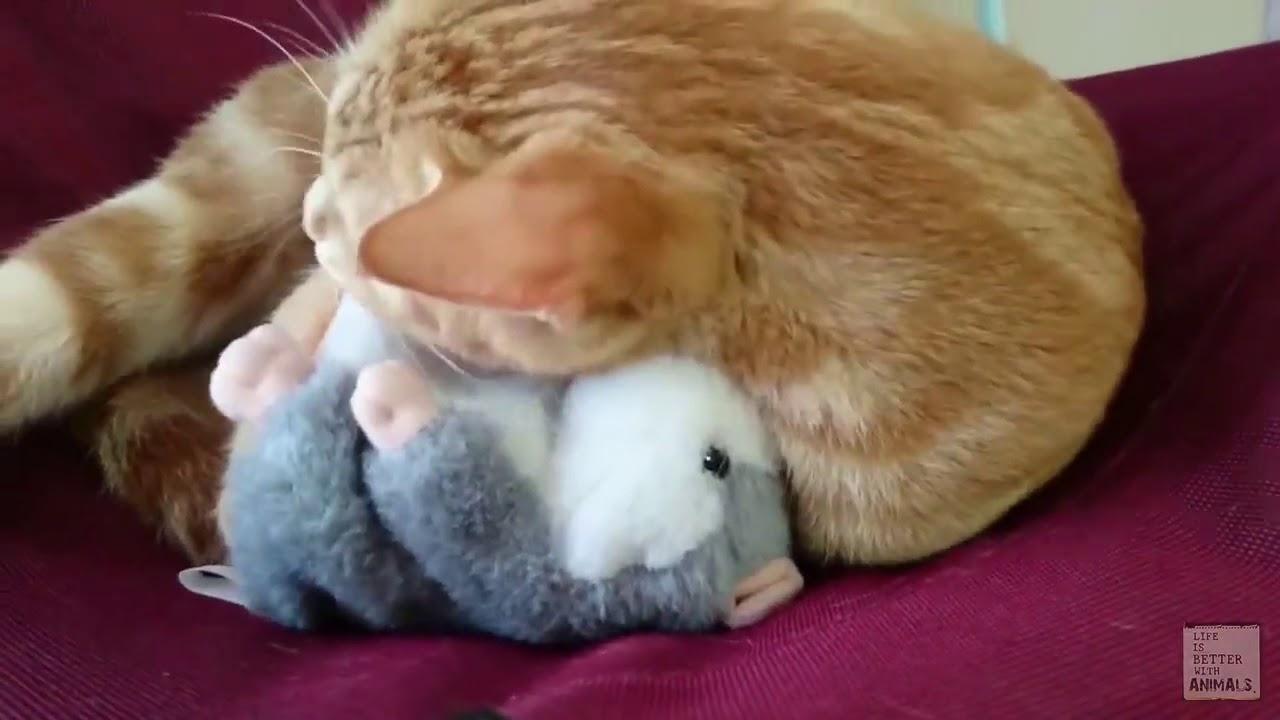 Cute Talking Hamster Plush Toy Buy Link In Description Youtube