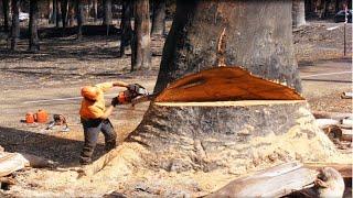 Genialne narzędzia i lifehacki do cięcia Gigantycznych drzew