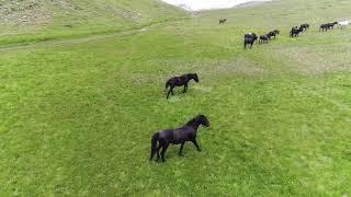 wild Horses at Greek Mountain Timfi (Zagori-Drakolimni-drone HD)