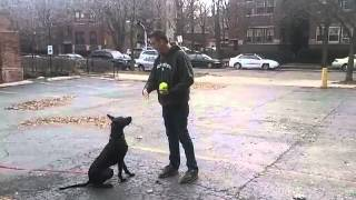 Impulse Control - How To Train Your Dog - Leave It And Drop It Obedience Training Part 4