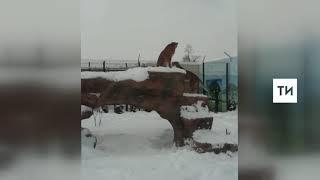 В казанском зоопарке африканские животные впервые выбрались на снег