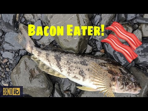 Alaska Bottom Fishing From Shore