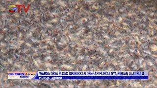 Ribuan Ulat Bulu Menyerang Rumah Warga di Kudus, Jawa Tengah - BIP 28/03