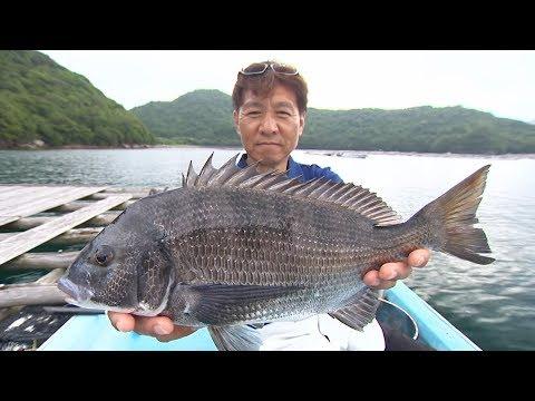 【釣り百景】#247 チヌに捧げる釣り人生 三重県南部で落し込み&カセ釣り