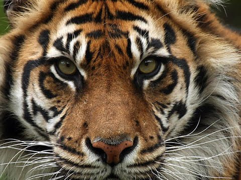 the man eater of malgudi Narayan'sthe man-eater of malgudiby jonathan kassian961872830 trin in rk narayan's book the man-eater of malgudi, there exists a deep mythical structure.