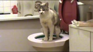 Cendrillon, le chat qui apprend à aller aux toilettes - Cat learnig how to go to the toilets