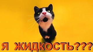Доказательство того, что КОТы -  это ЖИДКОСТЬ)))