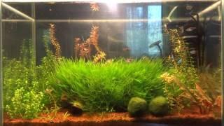 Нужна ли аэрация в аквариуме?