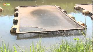Smart Farm - Caged Fish Farming