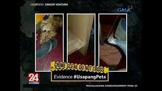 24 Oras: Usapang Pets: Pet Suspects