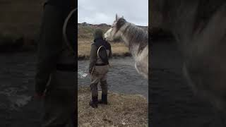 Guy doesn't realize horse is standing right behind him.