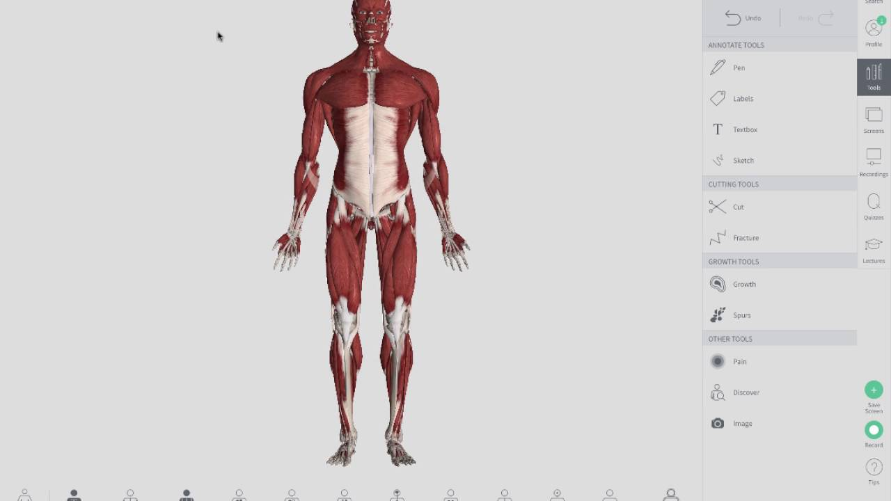 Upper Lower Crossed Syndromes Youtube