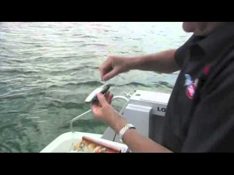 Snapper Fishing - What Bait To Use