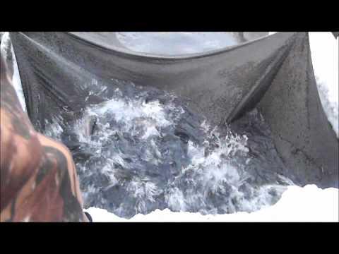 разведение форели в сибири видео
