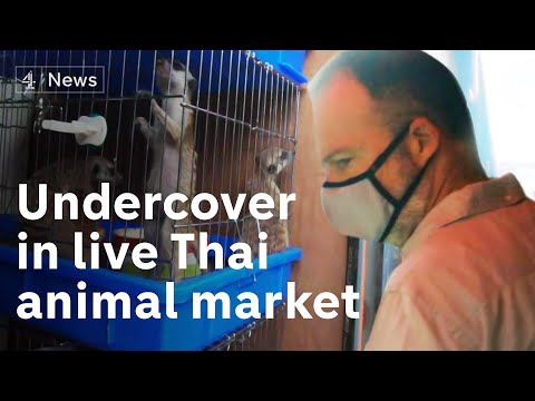 'Another Wuhan in the making?': Undercover in a Thailand market selling live animals