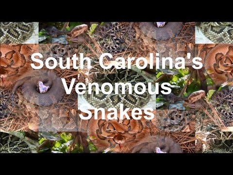 snakes in south carolina