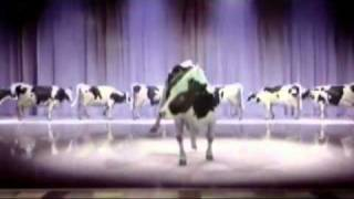 cow singing happy birthday