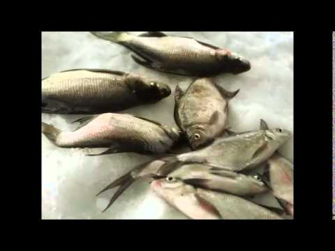 Яузское водохранилище 24- 25 января 2015(Пудыши)