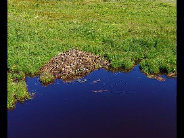 Beaver Pond From Above, Ekuk Alaska