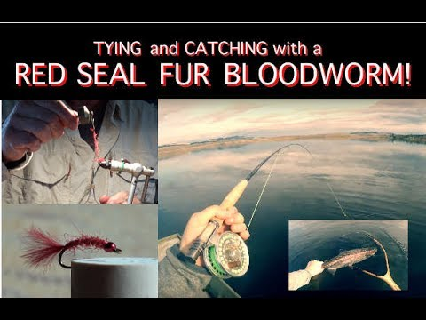 Tying And Catching With John Kent's Red Seal Bloodworm.