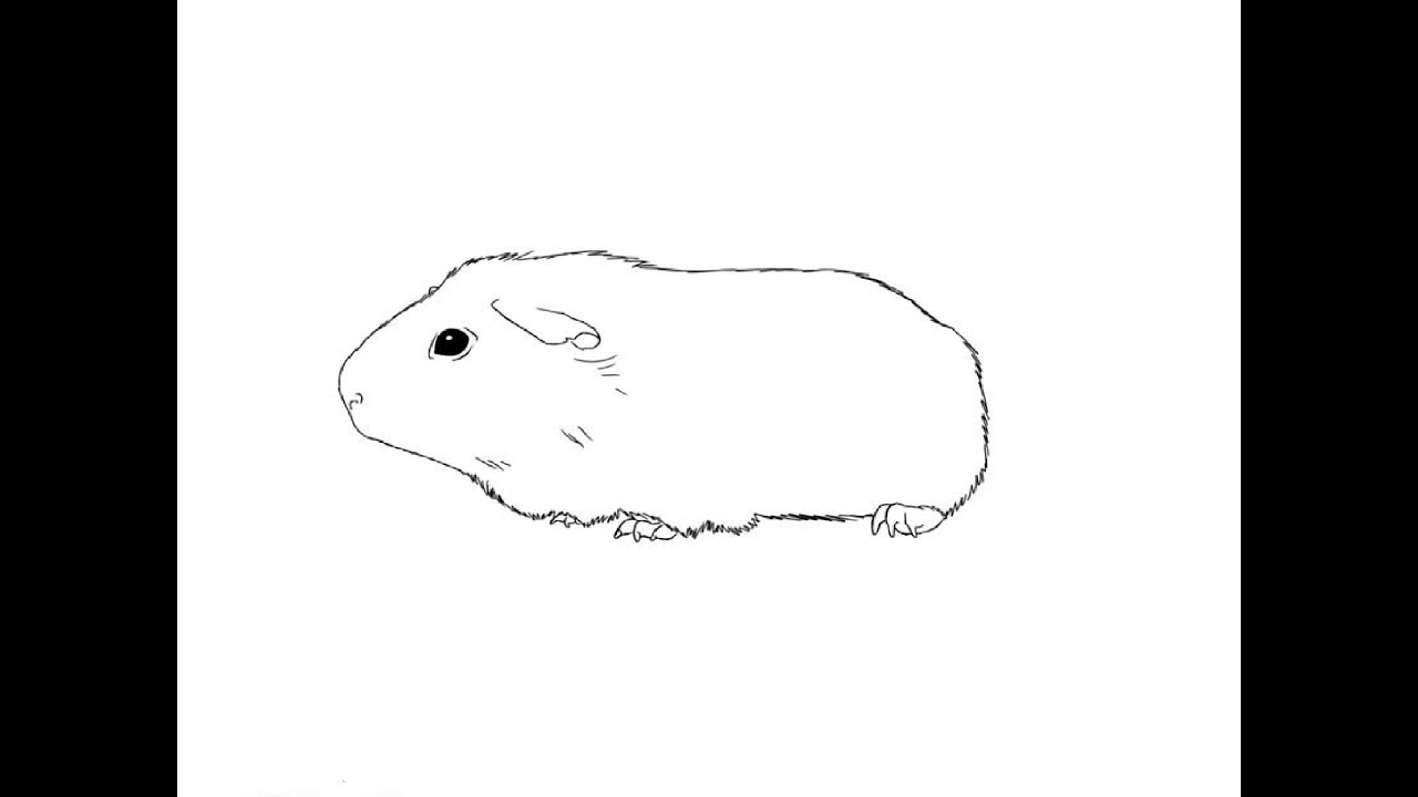 Uncategorized How To Draw A Guinea Pig Step By Step how to draw a guinea pig