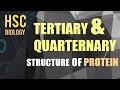 ০৮৮) অধ্যায় ৩ - কোষ রসায়ন : Tertiary & Quarternary Structure of Protein [HSC | Admission]