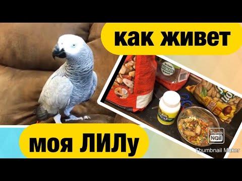 Вопрос: Можно ли попугаю жако давать айву?