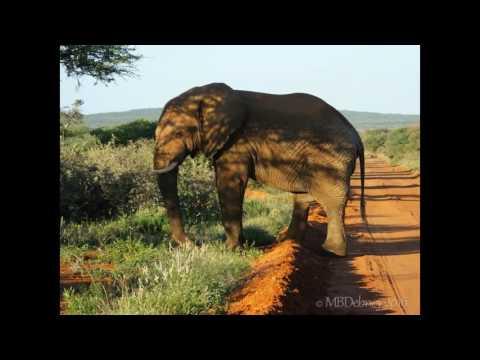 Africa 2016 - Madikwe - Arrival and Safari Drive-1