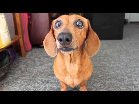 Why Does My Dog's Bottom Jaw Chatter? • Dog Pages