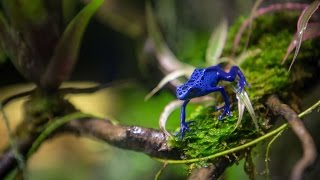 Poison Arrow Frogs at S.E.A. Aquarium | Resorts World Sentosa