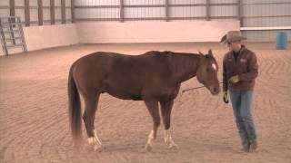 Teaching Liberty Work - Advantage Horsemanship TV