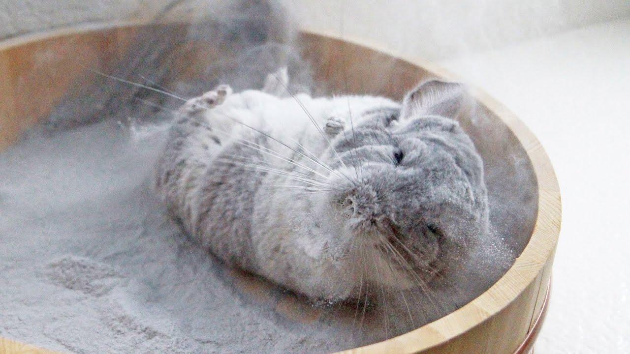 Chinchilla Dust Bath o...