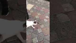 Bebeği ağlatan kedi :)
